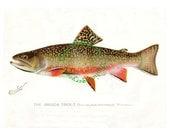 Vintage fish print digital download: Brook Trout, by S. F. Denton, 1903