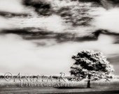 Black and White Tree Fine Art Photography Print - 8 x 12 - Infrared Landscape Nature Sky Clouds Dreamy Home Decor