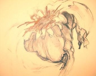 Food Drawings on Paper, Garlic