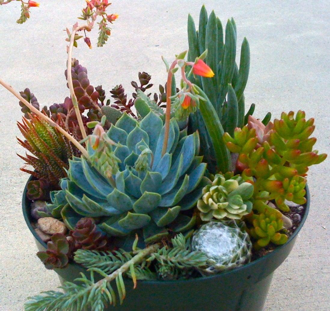 Greenery Centerpiece Kits : Succulent plants terrarium centerpieces dish