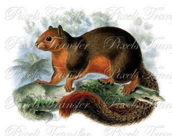 SQUIRREL Instant Download digital download, vintage mammals clipart illustration 191