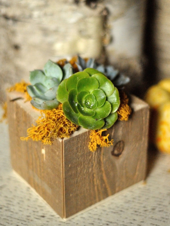 Items similar to succulent centerpiece in natural wood