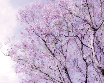 Tree Photograph Digital Download lavender flowers photo Nursery Decor tree picture blooming branches purple lavender wall art