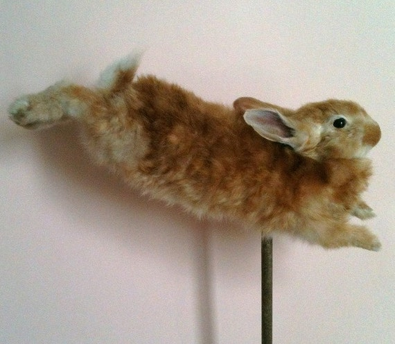 Taxidermy Leaping Red Rabbit