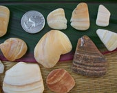 Craft shells, jewelry making supplies, natural sea shell fragments, wampum home beach decor, (Lot 145)