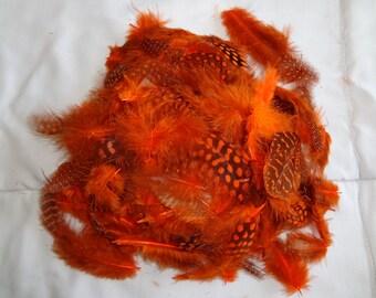 Bright Orange Spotted Guinea Hen Plumage Feather Wholesale Bulk Lot