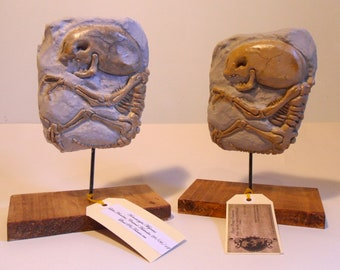 Alien Fetus Fossil and Display stand