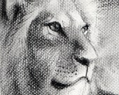 Lion Portrait Charcoal Drawing On Heavy Weight Textured Surface Paper