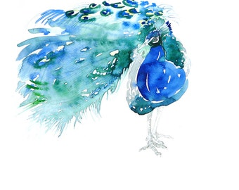 "Peacock Watercolor Painting 5 "" x 7 "" Giclee Print"