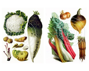 Vegetable Download  Vintage Vegetable Digital Download