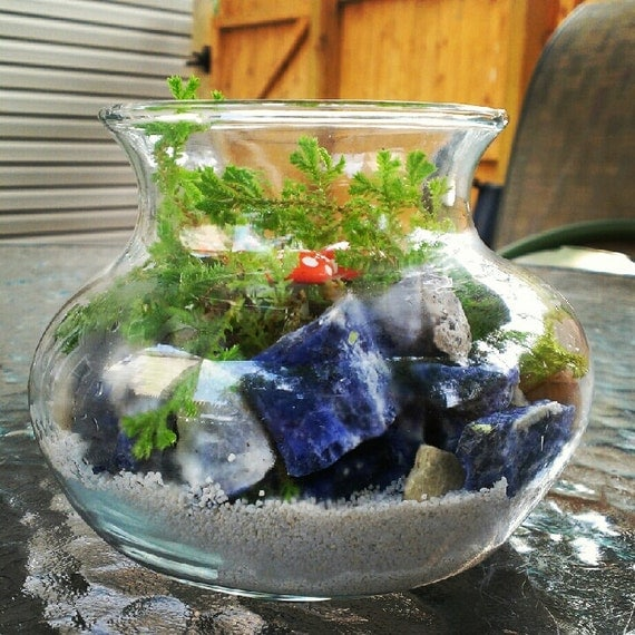 Fairy garden with real living golden moss terrarium with toadstool and crystals