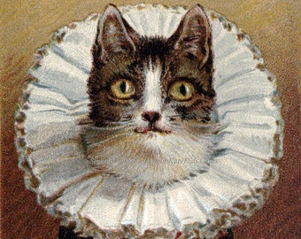 Cat in Elizabethan Collar Cotton Fabric Block | Repro Vintage Image