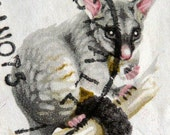 Australian Bushtail Possum Stamp Photograph - Retro Art Print 7x10