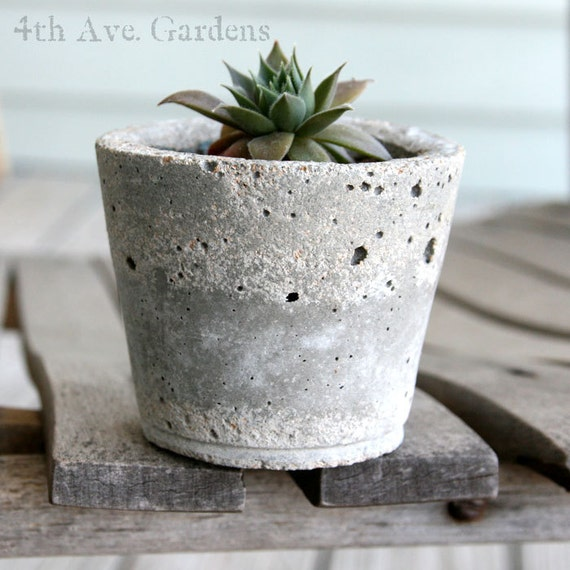 Nash - A Trapping Succulent In Handcrafted Cement Planter