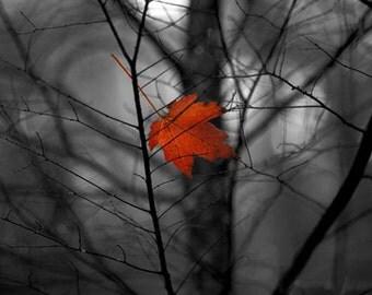 Black & White Red Leaf