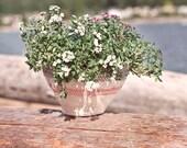 45 foot small plant pot
