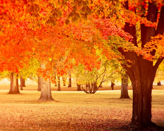 items similar to fall colors photograph warm vintage