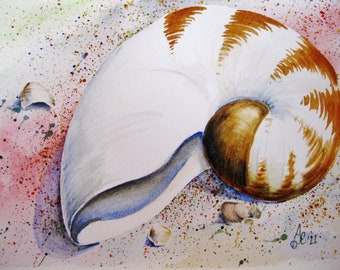 Nautilus Shell on Beach Giclee, or reproduced as greeting/note/gift cards, or Giclee print