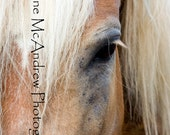 MAGGIE HAFLINGER Print to benefit Copper Horse Crusade
