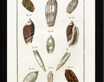 SHELL PRINT MARTINI  Art Print 12 Beautiful Antique Cone Shells Sea Ocean Nature to Frame Home Decoration Seashell