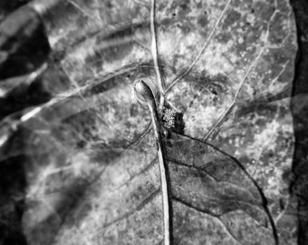 Underwater Autumn Twin Leaves Fall Black and White - Photography --  8x12