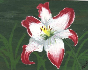 ACEO- Original Painting-Oriental Lily, Lollipop- By the Artist