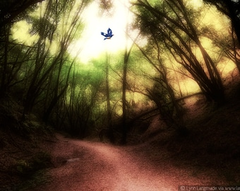 """Landscape Photography - bluebird flying in a black forest, bird wall art, forest wall prints, woods, red and black -- """"Epiphany"""""""