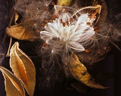 """Nature, Fall images, Seeds  / 8""""x10"""""""