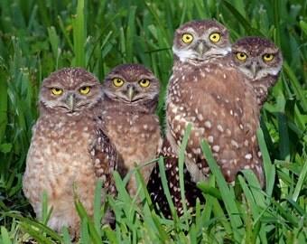 Burrowing Owl Family Portrait Photograph