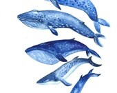 Whales - Original Watercolor Illustration / Painting Whale Art