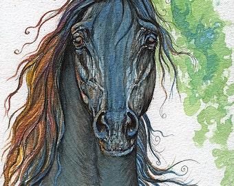 Ferryt Polish Arabian Stallion Watercolor painting