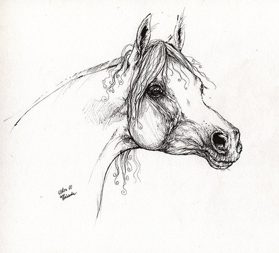 Eldon polish arabian horse pen drawing