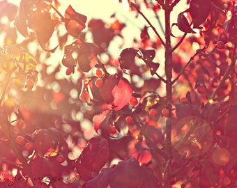 Autumn Nature Photography - Red Berries in the Sunset - 5 x 7 fine art print - red leaves orange glow sunlight tan rustic home decor