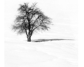 Black and White photography - Tree Nature Photography Landscape  Winter photography  Snow photography  Photo Print ( 8x8 inch )