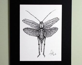 Art Print // LOCUST - Pen & Ink