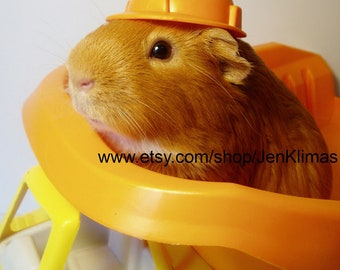 """GUINEA PIG """"Construction for Hire"""" Limited Edition Photo - 8x10"""" Glossy Adorable Cavy Construction Worker Portrait"""