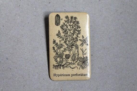 Botanical Brooch - Hypericum perforatum