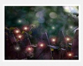 Nature Photogaphy, fantasy, fairies, seed pods, purple, bokeh, One Enchanted Evening fine art photgraphy print