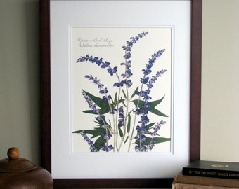 Pressed flower print, 11x14 double matted, Mexican Bush Sage, purple Salvia plant, wall decor no. 0046