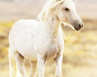 Freedom's Glow - Fine Art Wild Horse Photograph - Wild Horse - Adobe Town