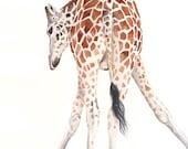 Giraffe painting - G064- wildlife art animal safari - Print of watercolor painting, giraffe watercolor painting A4 print