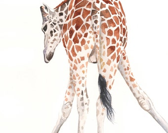Giraffe Painting- G064- wildlife art-  print of watercolor painting A4 print