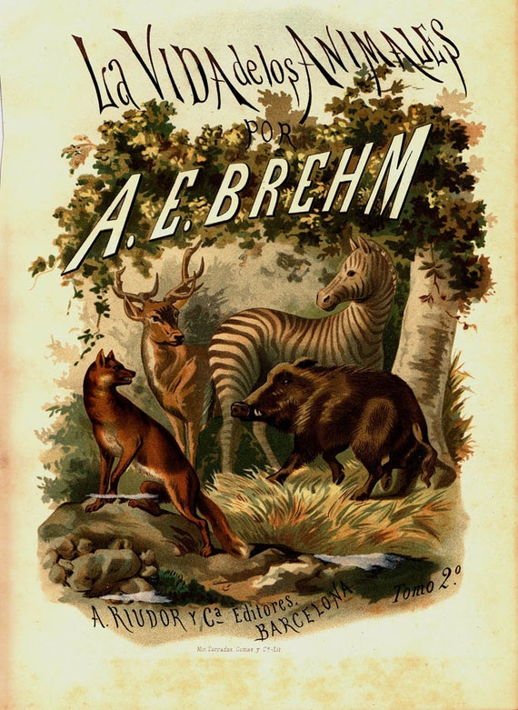 1883 Antique Illustration  Mammals  Brehm's Life of Animals Title Page Color Lithograph Zebra Deer