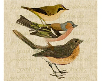 Vintage red breasted bird stack Digital download graphic image for transfer to fabric decoupage paper burlap pillows tote bags cards No. 573
