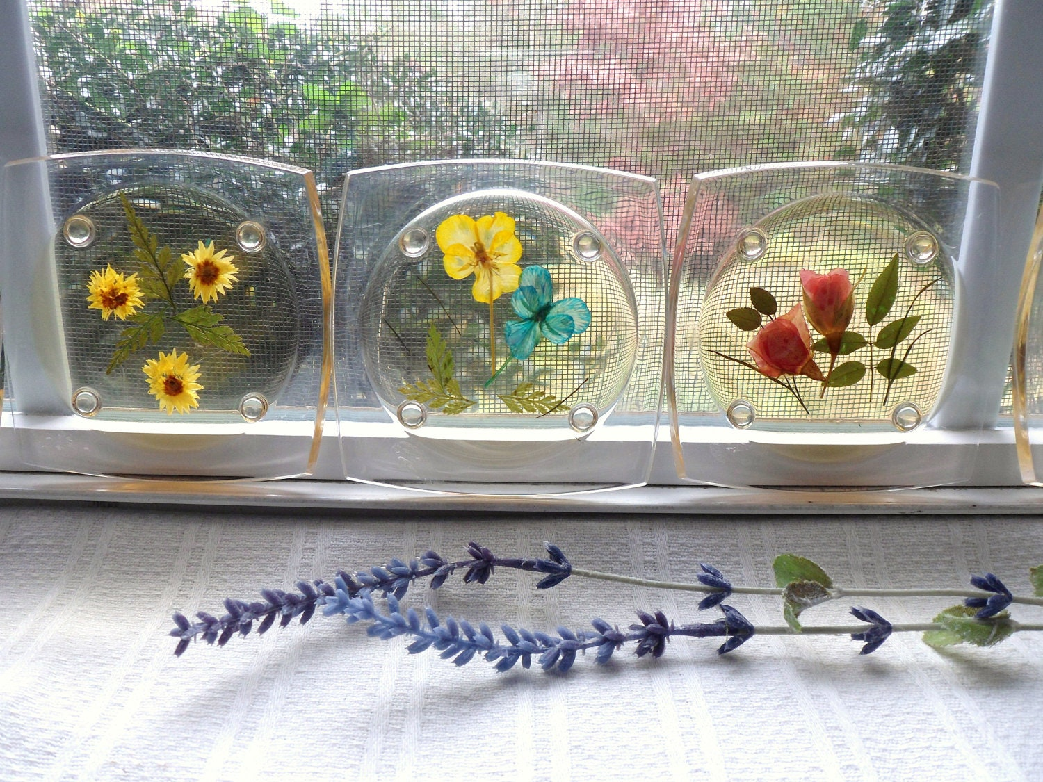 Acrylic Coasters Five Dried Flower Plastic Coasters Pressed
