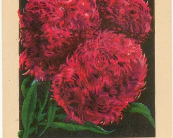 CHINESE WOOL FLOWER Vintage Flower Seed Packet Tucker's Lithograph in Carthage Missouri