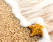 Sea Star Photography, Starfish Photography, Beach sand and waves, Shark, Beach Print 8x8