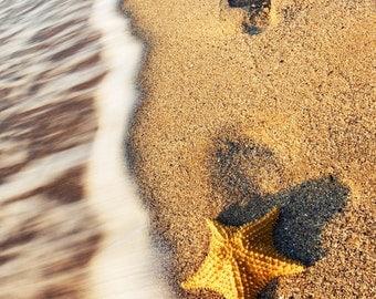 Summer romantic photograph, Starfish and sand footprints, Beach sand and waves, Shark, Beach Print 8x10 or 8x12