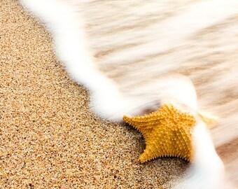 Sea Star Photography, Starfish Photography, Beach sand and waves, Shark, Beach Print 8x8
