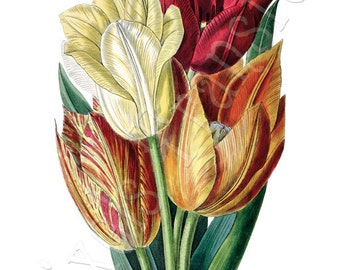 TULIPS Instant Download digital collage sheet flowers clipart digital wedding 143
